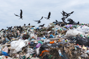 Закарпатське сміття з хати