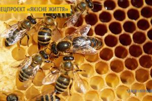 На Луганщині розвивають медовий туризм