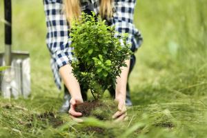 Можно ли посадить дерево во дворе без разрешения?