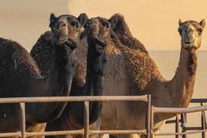 Украинцев предупреждают о еще одном коронавирусе на Ближнем Востоке