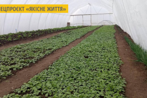 На Миколаївщині підприємство учасників АТО виростило перший екологічно чистий редис