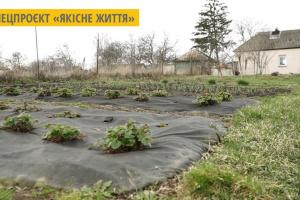 На Чернігівщині місцева жителька перетворює органічне сміття на теплі грядки