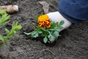 Маленьких українців усього світу запросили до еко-конкурсу до Дня Землі