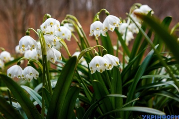До +23° и сухо - в Украину пришла настоящая весна
