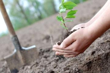 «Озеленение планеты»: третий Президент, министры и послы высадят деревья в Пуще-Водице