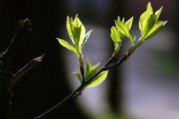 Дожди, грозы и до +20°: что несет Украине новая неделя весны