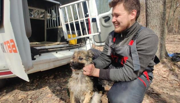 На Харківщині врятували собаку, який тиждень пробув на крижині