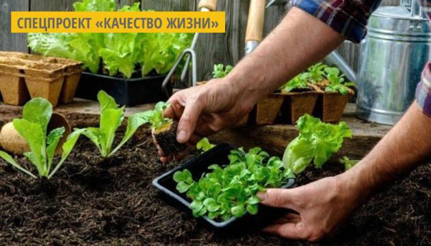 Салат и шпинат: полезные свойства