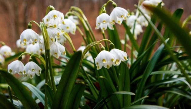 До +23° і переважно сухо — в Україну прийшла справжня весна