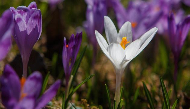 Весна возвращается: на выходные будет сухо и до +20°
