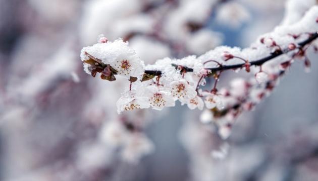 Сніг 26 квітня не нашкодить майбутньому врожаю - синоптик
