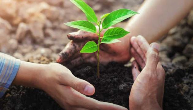 Асоціація українських медпрацівників Онтаріо долучилася до «Озеленення планети»