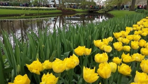 У Нідерландах для відвідувачів відкриють парк квітів Кекенхоф
