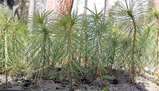 В Житомирской области высадили более 160 гектаров молодого леса