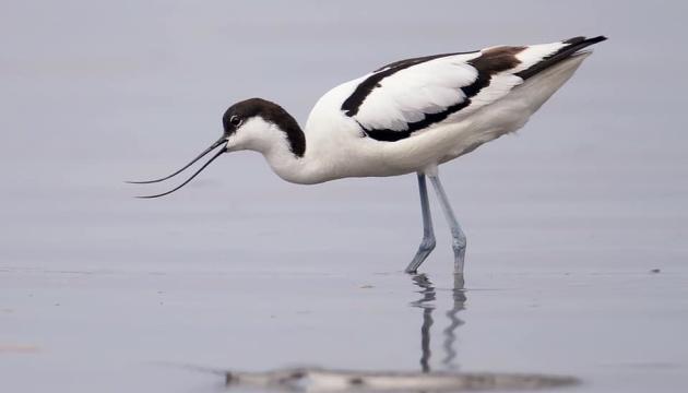 На Тилігульському лимані будують штучні острівці для гніздування рідкісних птахів