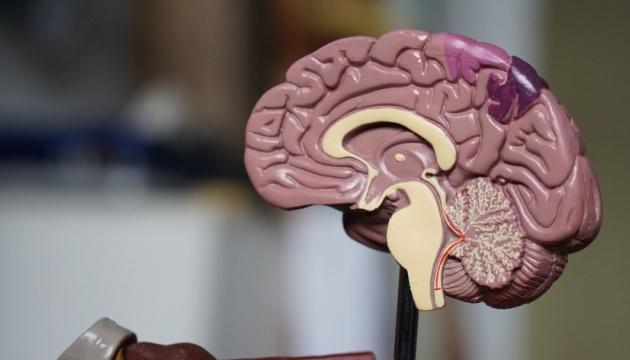 Ученые нашли новый способ уничтожать раковые клетки опухоли головного мозга