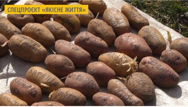 Дачниця з Хмельниччини вирощує 80 сортів картоплі
