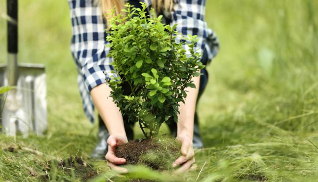 Чи можна посадити дерево у дворі без дозволу?