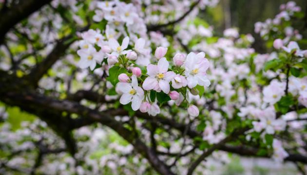 19 апреля: народный календарь и астровестник