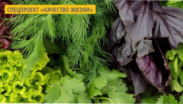 На Хмельнитчине фермер выращивает зелень и овощи с помощью IТ-технологий