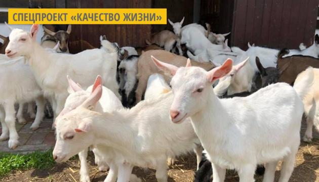 На Харьковщине производят натуральную косметику из козьего молока