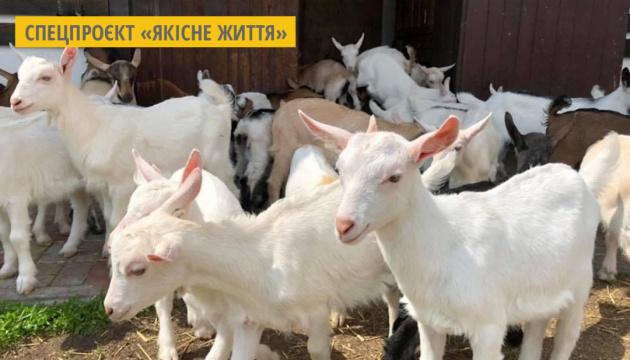 Kharkiv : Une famille des fermiers fabrique les cosmétiques naturels et des produits laitiers bio à partir de lait de chèvre
