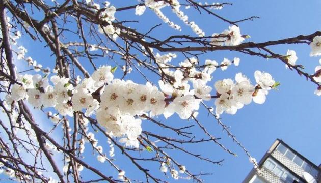 У Запоріжжі з абрикосових дерев обсипалося листя