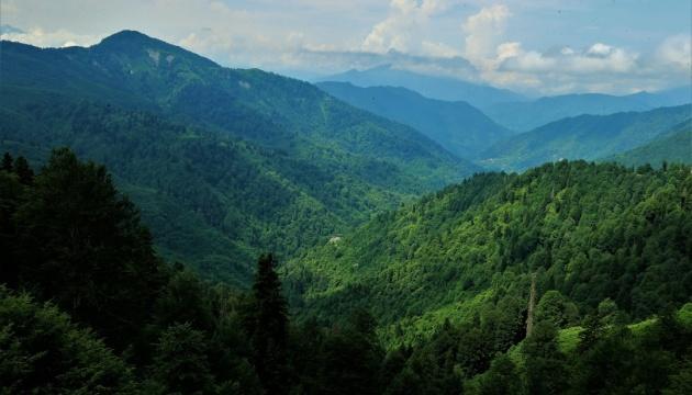 Зеленая страна: как Турция покрывает себя лесами