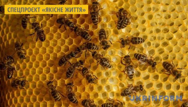 На Луганщині пасічник лікує бджіл полином та хроном