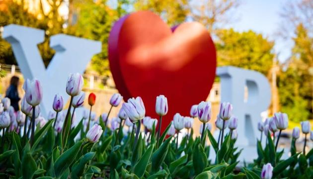 В Ужгороді квітнуть близько 30 тисяч тюльпанів