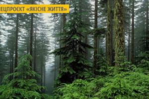 На Житомирщині збільшують площі листяних дерев для попередження лісових пожеж