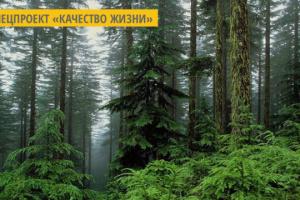 На Житомирщине увеличивают площади лиственных деревьев для предупреждения лесных пожаров