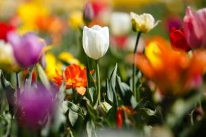 На дев'яте травня українцям прогнозують від 0° до +20°