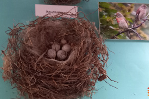 У Франківську презентували колекцію пташиних гнізд