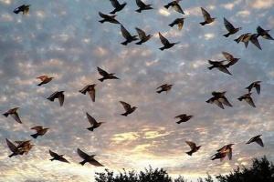 На Землі живе 50 мільярдів птахів – вчені