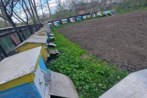 На Прикарпатье зафиксировали массовое отравление пчел