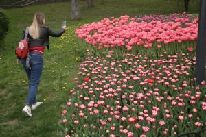 На Співочому полі розквітли понад 700 тисяч тюльпанів