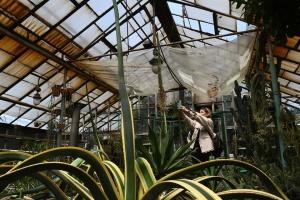 Тюльпан-морозиво й рідкісний цвіт агави: запорізький ботсад відновлює роботу
