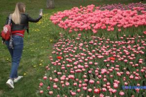 700.000 Tulpen auf Sängerfeld in Kyjiw erblüht