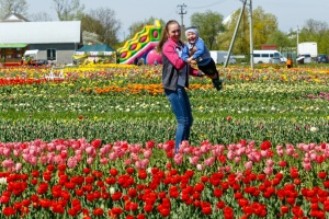 Цветочный рай: как Буковину «завоевали» тюльпанные и лавандовые поля