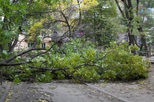 Сильний вітер повалив дерева у Харкові