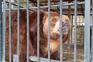 Ветеринари назвали причини смерті ведмедя Юри у «Синевирі»