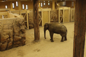 В новом зоопарке Харькова слонам отдали комплекс с бассейном и водопадом