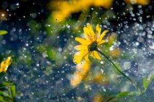 На вихідні прогріє до +29°, але прогнозують сильні дощі та грози