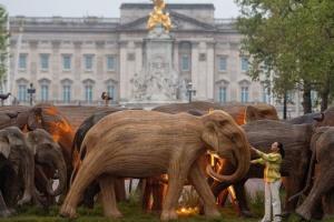 Стадо дерев'яних слонів «пригнали» до Букінгемського палацу