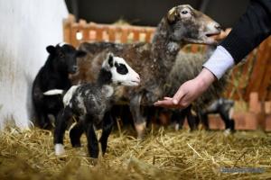 Ферма, сыроварня, пекарня и их «особый» персонал
