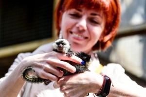 Карликові мавпочки і корови часів мамонтів: у Бердянському зоопарку – нові тварини