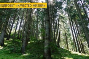 В лесхозах Житомирской области посеяли 65 тонн семян деревьев