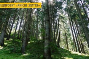 У лісгоспах Житомирщини посіяли 65 тонн насіння дерев