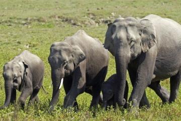 В Индии погибли почти два десятка слонов